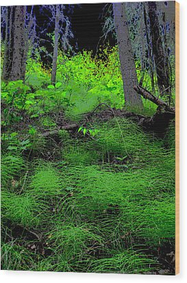 Horsetails Wood Print by Anne Havard