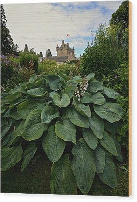 Hosta At Cowdor Castle Wood Print