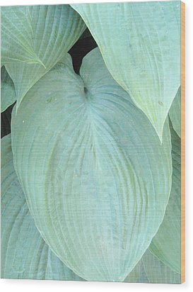 Wood Print featuring the photograph Hosta by Beth Akerman