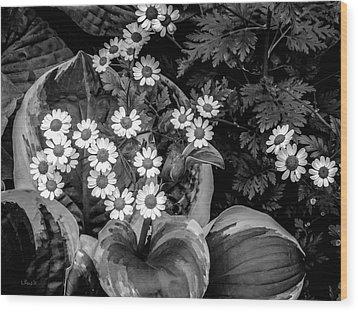 Hosta Daisies Wood Print