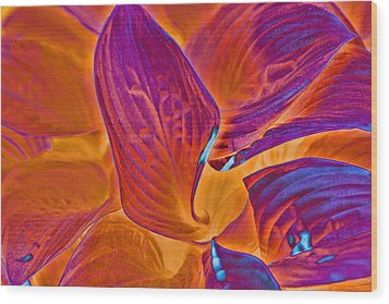 Wood Print featuring the photograph Hostas With Sabattier by Bill Barber