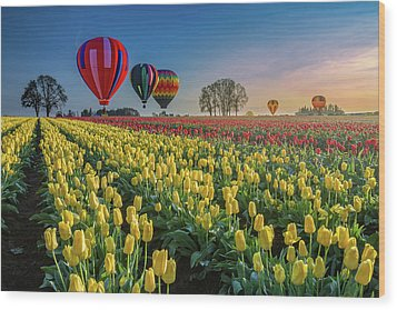 Wood Print featuring the photograph Hot Air Balloons Over Tulip Fields by William Lee