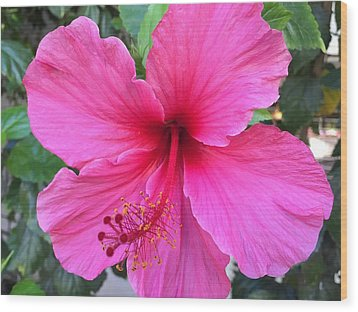 Hot Pink Hibiscus  Wood Print by Russell Keating