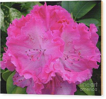 Hot Pink Rhoda Wood Print