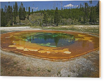 Hot Springs Yellowstone National Park Wood Print by Garry Gay