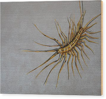 House Centipede Wood Print