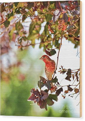 Wood Print featuring the photograph House Finch Hanging Around by Kerri Farley