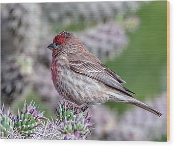 House Finch Male Wood Print by Tam Ryan
