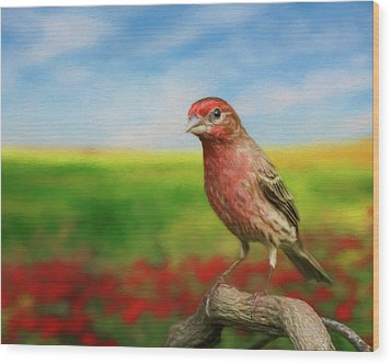 Wood Print featuring the photograph House Finch by Steven Richardson