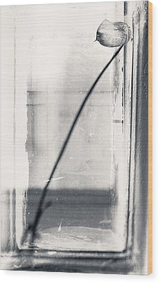 Houseplant #5147 Wood Print by Andrey Godyaykin