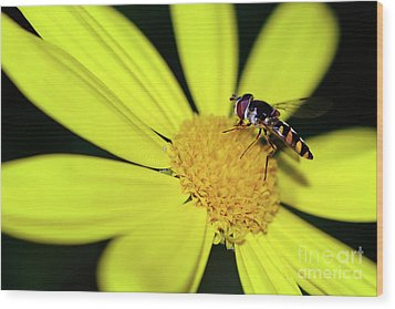 Wood Print featuring the photograph Hoverfly On Bright Yellow Daisy By Kaye Menner by Kaye Menner
