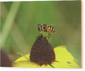 Hoverfly On Brown Eyed Susan Wood Print by Michael Peychich