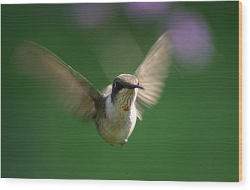 Hovering Hummingbird Wood Print by Robert E Alter Reflections of Infinity