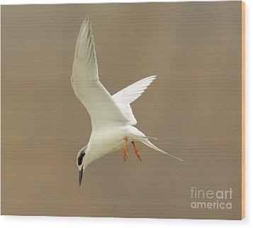 Hovering Tern Wood Print by Robert Frederick