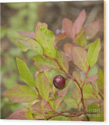 Huckleberry Wood Print by Idaho Scenic Images Linda Lantzy