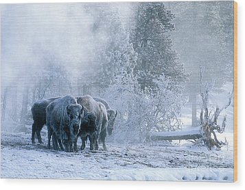 Huddled For Warmth Wood Print by Sandra Bronstein