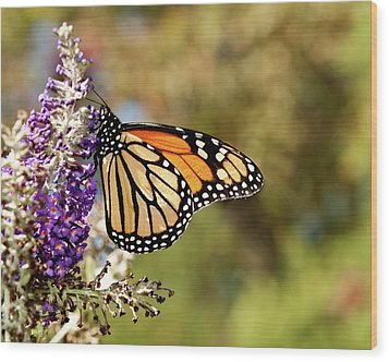 Wood Print featuring the photograph Hues Of Autumn Monarch by Lara Ellis