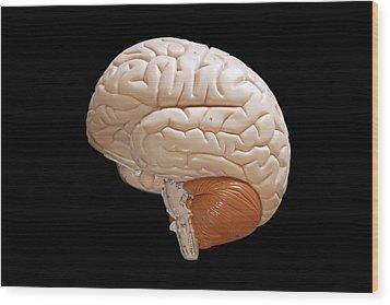 Human Brain Wood Print by Richard Newstead