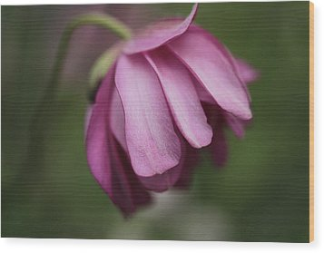 Wood Print featuring the photograph Humble Beginnings by Connie Handscomb