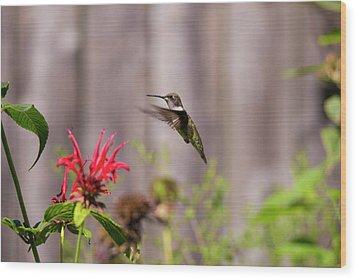 Humming Bird Hovering Wood Print