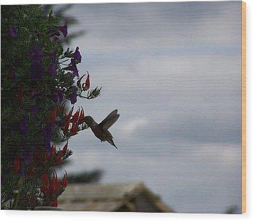 Humming Bird In The Parrots Beak Wood Print by Laurie Kidd