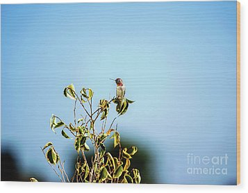 Wood Print featuring the photograph Humming Bird On A Branch by Micah May