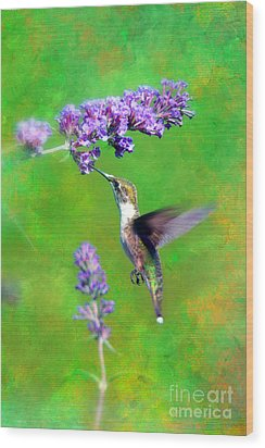 Humming Bird Visit Wood Print by Lila Fisher-Wenzel