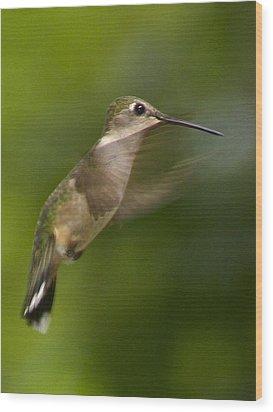 Hummingbird 1 Wood Print by Fred Baird