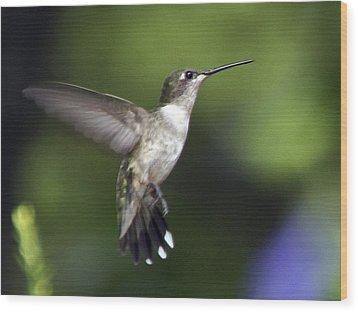 Hummingbird 2 Wood Print by Fred Baird