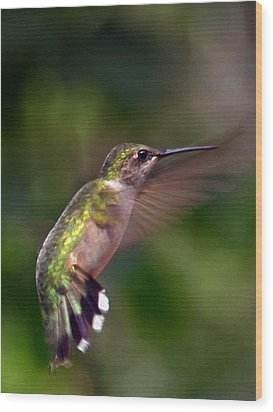 Hummingbird 3 Wood Print by Fred Baird