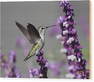 Hummingbird And Purple Flowers Wood Print
