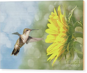 Hummingbird And Sunflower Wood Print