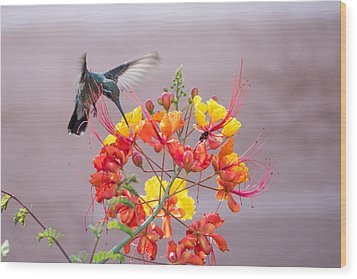 Wood Print featuring the photograph Hummingbird At Work by Dan McManus