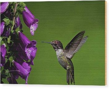 Wood Print featuring the photograph Hummingbird Ballet by Lara Ellis
