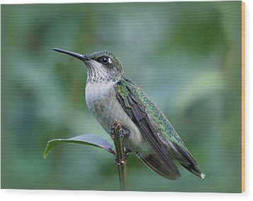 Hummingbird Close-up Wood Print by Sandy Keeton