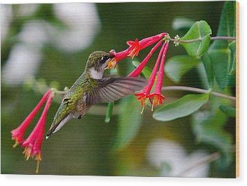 Hummingbird Feeding Wood Print