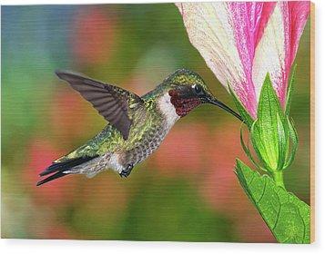 Hummingbird Feeding On Hibiscus Wood Print by DansPhotoArt on flickr
