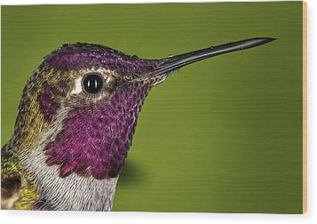 Wood Print featuring the photograph Hummingbird Head Shot With Raindrops by William Lee