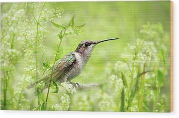 Hummingbird Hiding In Flowers Wood Print by Christina Rollo