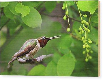 Hummingbird Hiding In Tree Wood Print by Christina Rollo