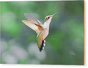 Hummingbird Hovering Wood Print
