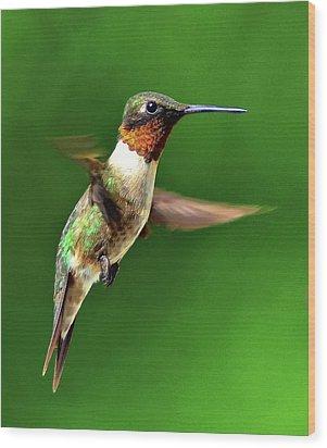Hummingbird In Mid-air Wood Print by Jeff R Clow