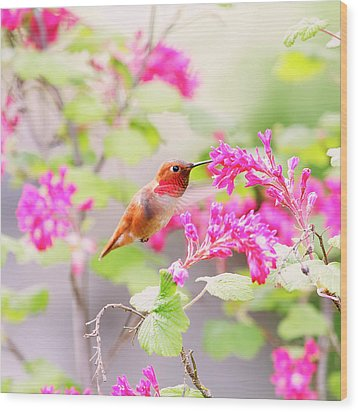 Hummingbird In Spring Wood Print