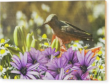 Wood Print featuring the photograph Hummingbird In The Spring Rain by Diane Schuster