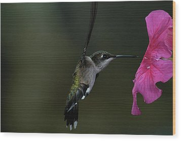 Wood Print featuring the photograph Hummingbird by Mike Martin