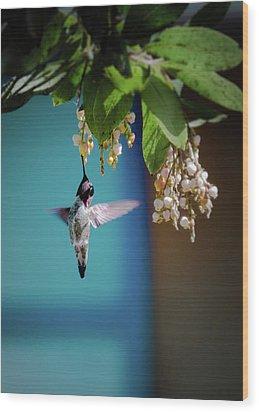 Hummingbird Moment Wood Print by Mark Dunton