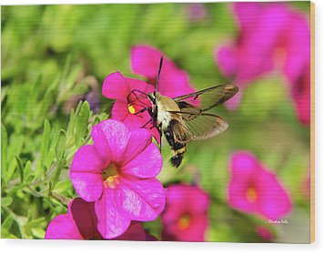 Wood Print featuring the photograph Hummingbird Moth by Christina Rollo