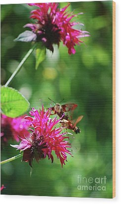 Wood Print featuring the photograph Hummingbird Moth by Lila Fisher-Wenzel