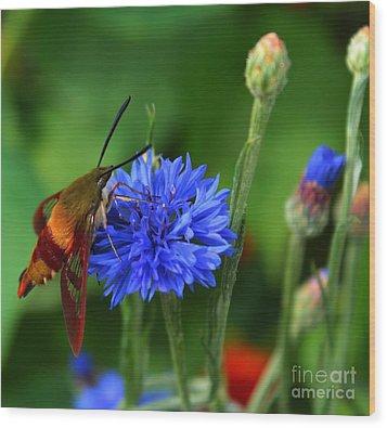 Hummingbird Moth Wood Print by Marjorie Imbeau