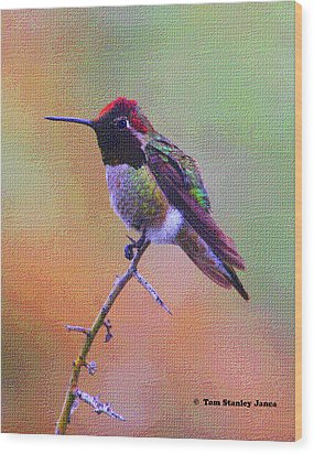 Hummingbird On A Stick Wood Print